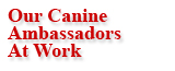 Our Canine Ambassadors at Work